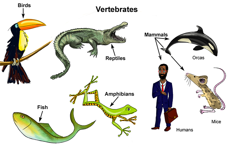 Fish, birds, reptiles, amphibians and mice all have endoskeletons
