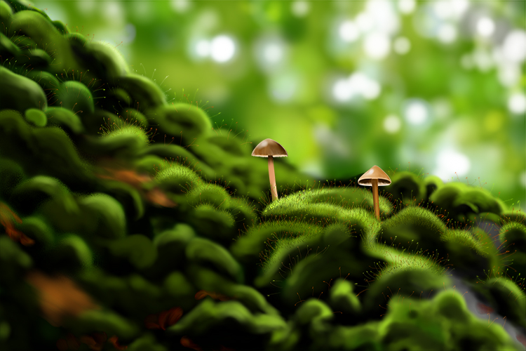 An image of moss that makes spores