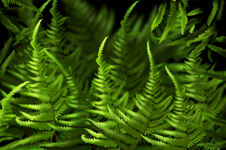 Image of a fern, vascular plants have a system for conducting water through the plant