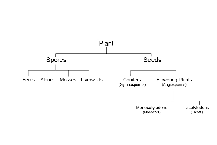 A tree diagram summarizing the categories and sub categories of plants