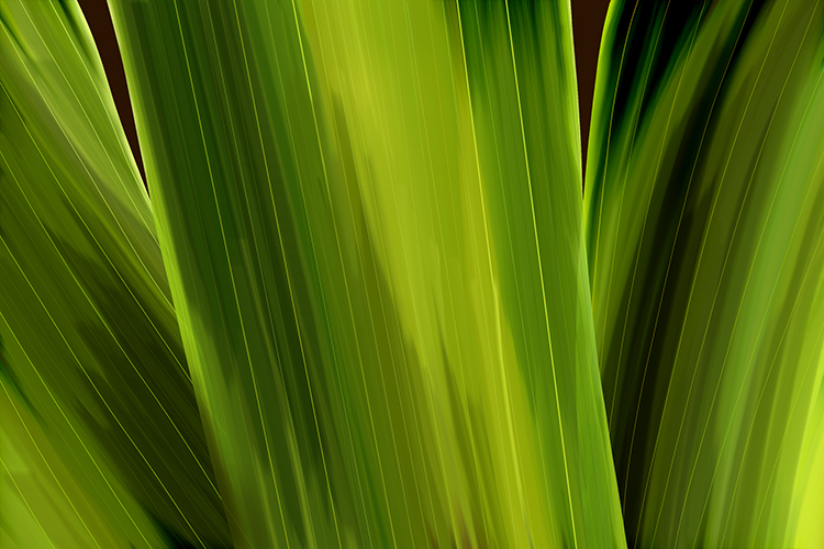An image showing a monocot plant has vertical veins in its leaves