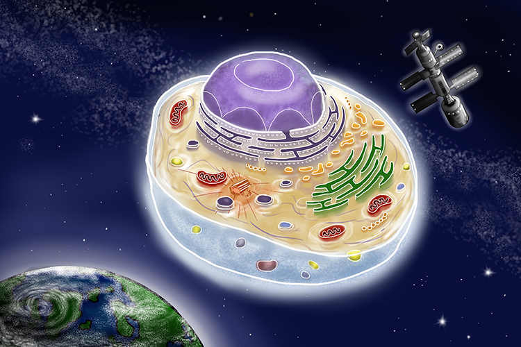 Fictional graphic showing a cell as battle star galactica