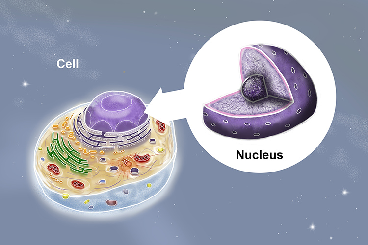 Image of a fictional cell with magnificated sections of the nucleus